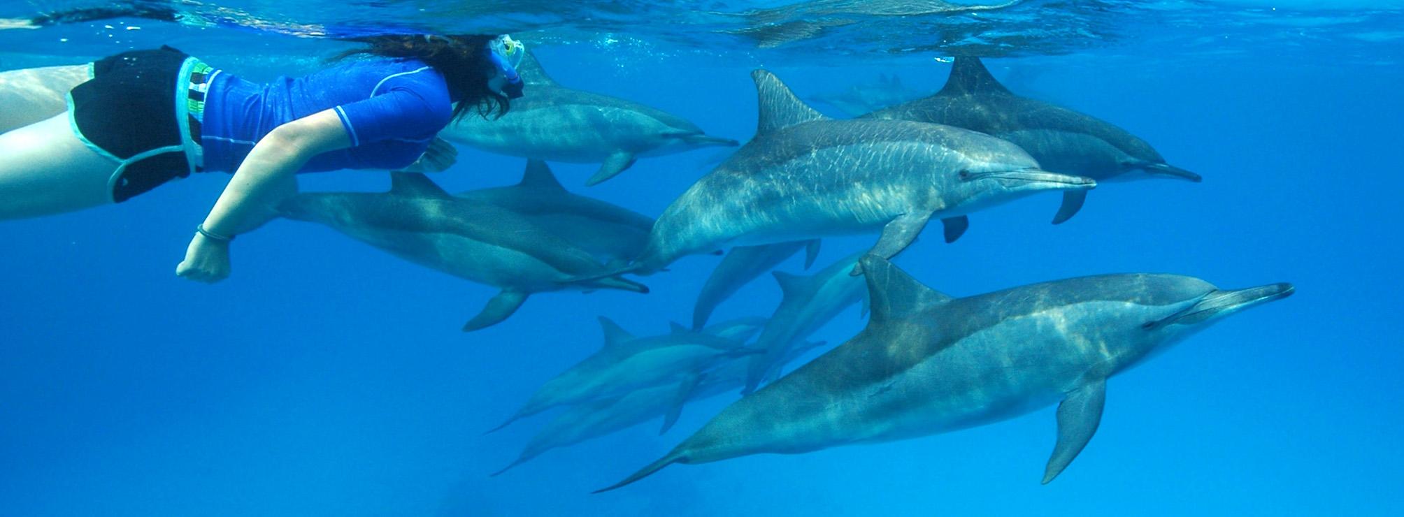 Mer rouge 2018 centre ressourcements - Nager avec les dauphins en piscine ...